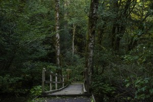 Golden and Silver Falls - 0130